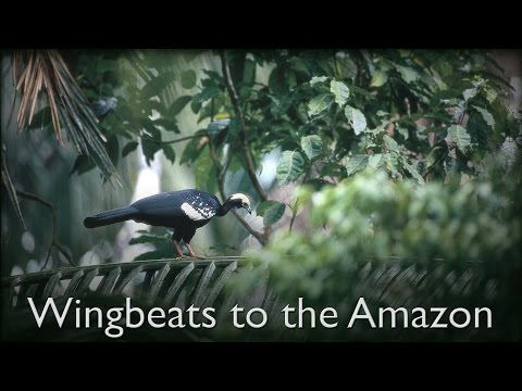 Wingbeats to the Amazon - The Secrets of Nature