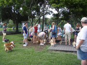 Tampa Bay Corgi Meetup - May Edition - West Park Tampa
