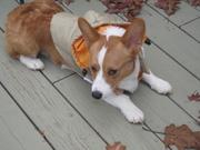 Pensive Rufus