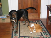 Rufus and Ralph