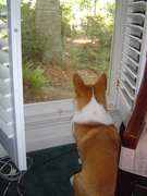 Squirrel watch dog.  Squirrels Beware!