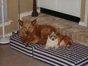 Puppy Ziggy