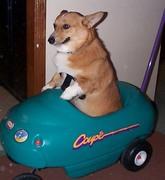 dogincar