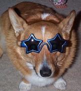 coolshadesdog