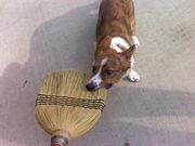 helping me clean