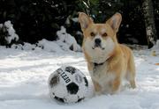 Snowdog Joy