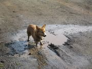 Corie playing in a puddle
