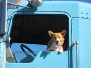 Cori and Uncle Mario's truck