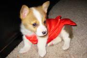 Chloe in her little red dress!