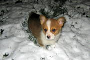 this snow sure is cold!