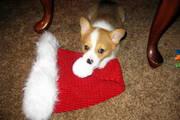 look mom! I ate'd santa!