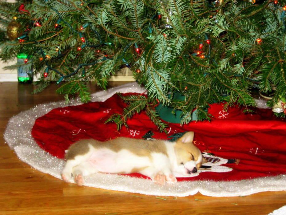 she loves the tree!