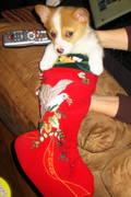 the perfect stocking stuffer!