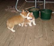 Gimli & Suzie