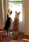 Rocky & Rosie Neighborhood Watch 2008