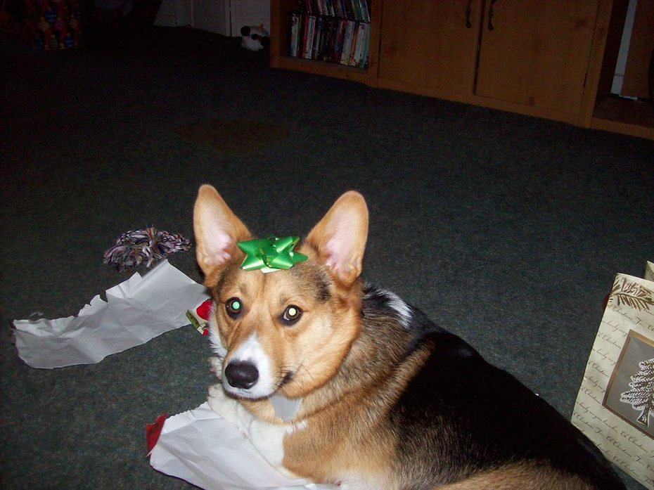 Rocky  the Christmas present?