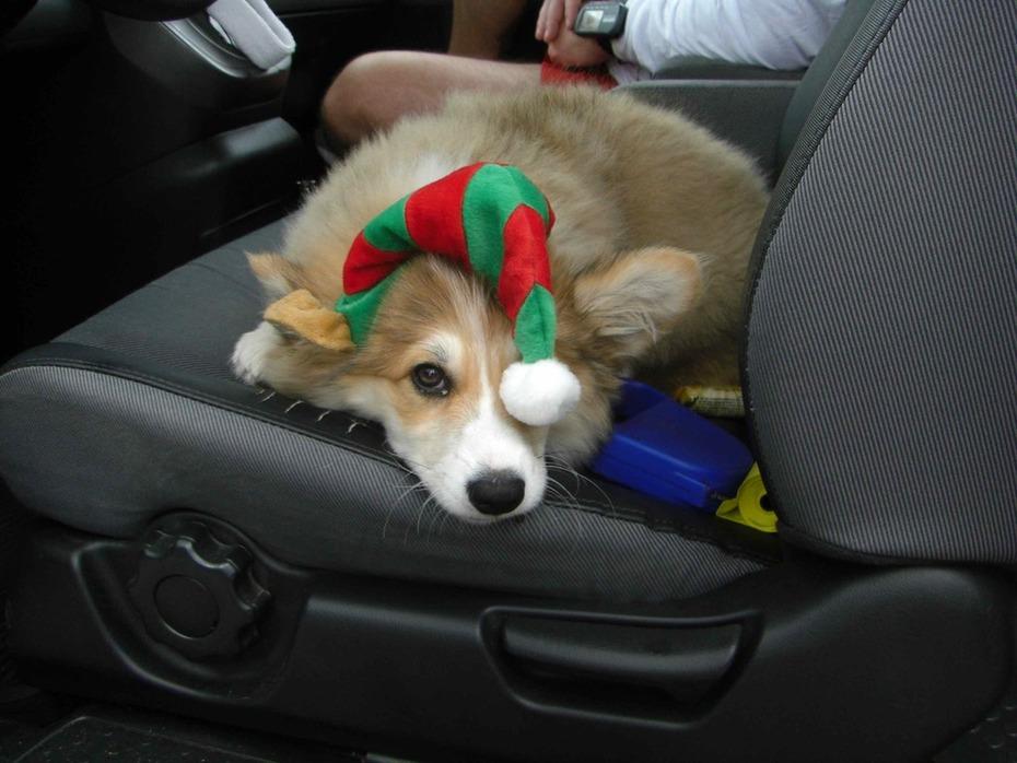 Santa's little helper looks tired!