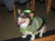 Sadie Halloween