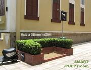 Dog Toilet in Macau