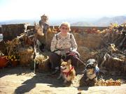 Corgis at the Black Rock Mountains