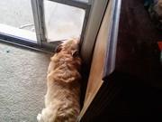 maddie in dog door