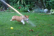Hose Play- Our favorite game!