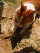 Winsday Digging
