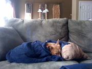 Penny taking nap on couch