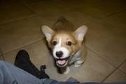 Aurora's Smile
