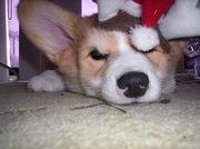 Christmas-Time 2008