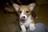 Kari and the Pups
