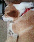 Sleepin Ches