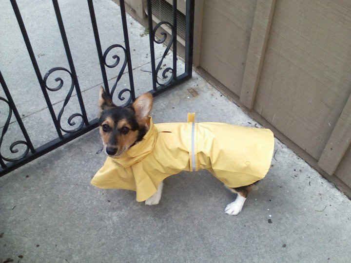 Trying out the new raincoat