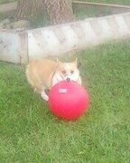 Ches playing ball 3
