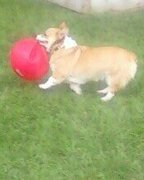 Ches playing ball