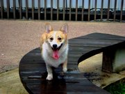 Strolling on a bench!