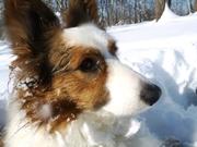 Nimh enjoying the snow