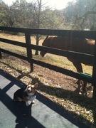 Photo uploaded on January 6, 2011