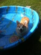 baron pool day 007