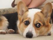 Penelope 7 4 2011
