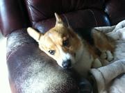favorite spot on the sofa