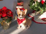Cody at Christmas 2011