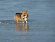 Chewey at Carmel Beach
