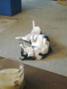 Bailey being goofy