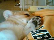 Cuddle nap.