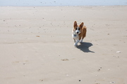 Beach patrol!