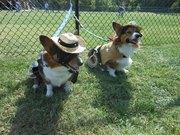 Bandit and Sheriff