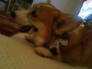 Photo uploaded on December 21, 2012