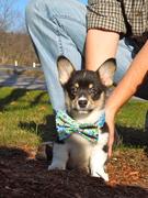 Loki 8 weeks old