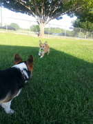 Fetch at the Ft. Woof Dog Park